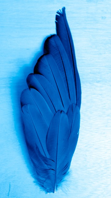 Laguna Blu feather